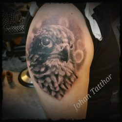 Hawk Tattoo – Johan Schouten